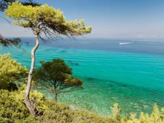 pine-forest-over-sea-in-greece